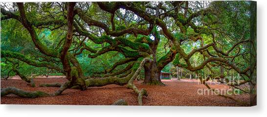 Old Southern Live Oak Canvas Print