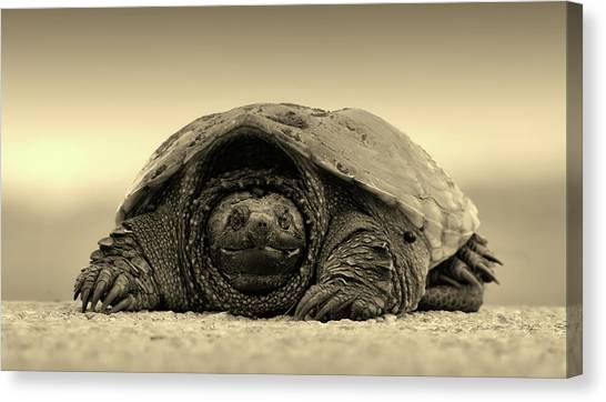 Snapping Turtles Canvas Print - On The Beach by Unsplash