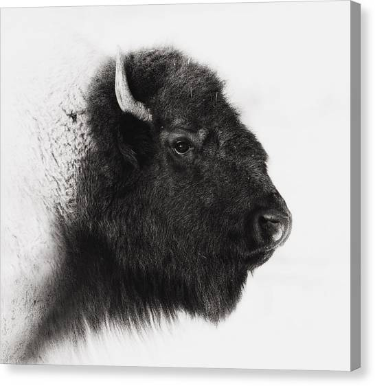 Bison Canvas Print - Once We Were Many by Ron  McGinnis