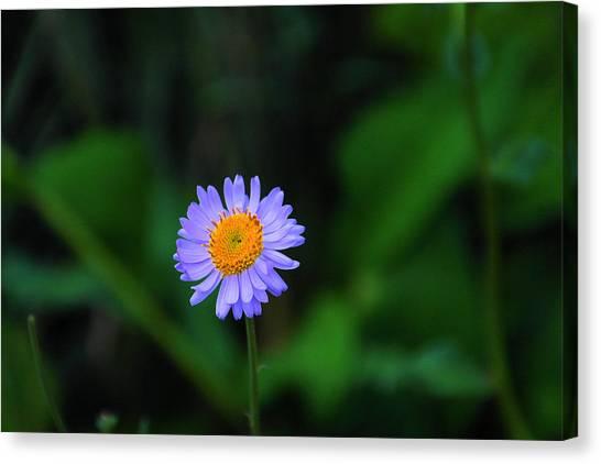 Little Things Canvas Print - One Little Wildflower by Jeff Swan