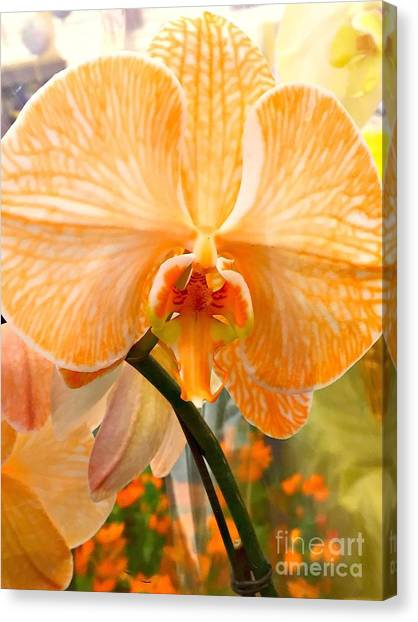 Orange Delight Canvas Print