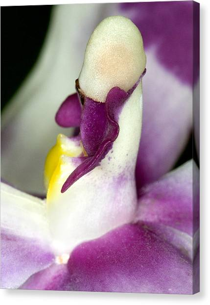 Orchid Flower Bloom Canvas Print