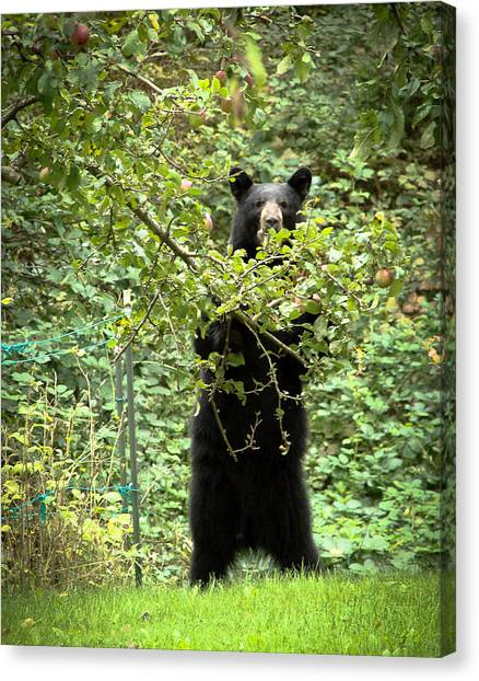 Our Bear Loves Apples Canvas Print