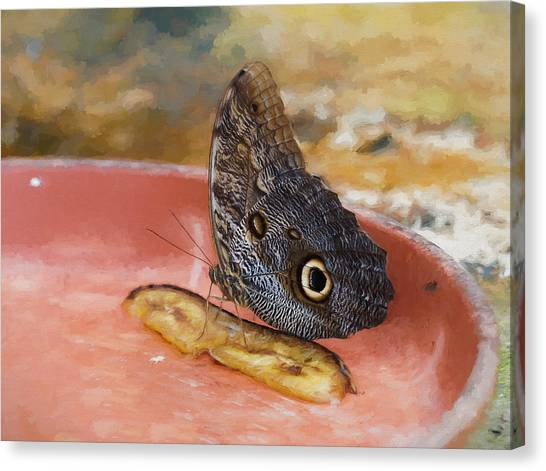 Canvas Print featuring the photograph Owl Butterfly 2 by Paul Gulliver