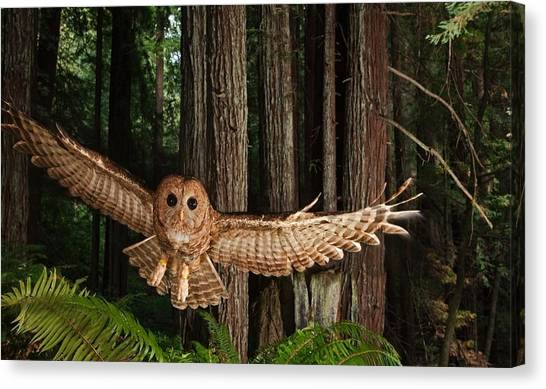 Apes Canvas Print - Owl by Jackie Russo