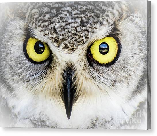 Owlsome Canvas Print