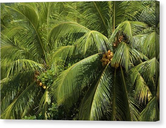 Palm Trees Canvas Print by Vanessa Devolder