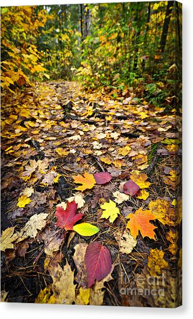 Algonquin Park Canvas Print - Path In Fall Forest by Elena Elisseeva