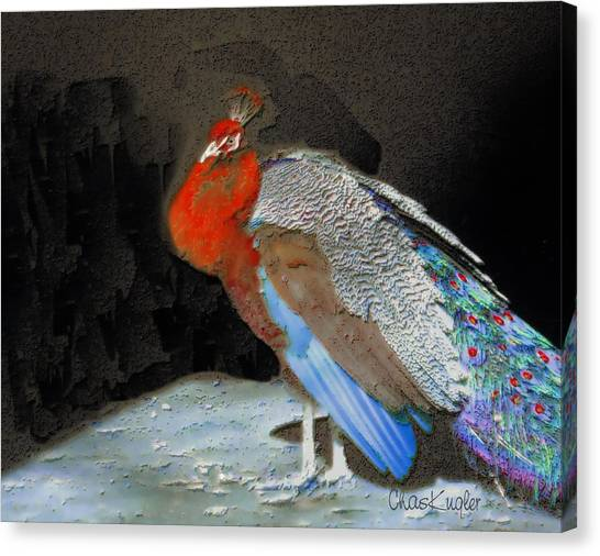 Peacock II Canvas Print by Chuck Kugler