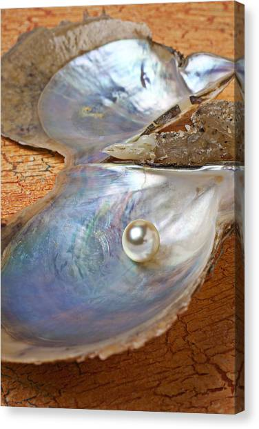 Oysters Canvas Print - Pearl In Oyster Shell by Garry Gay