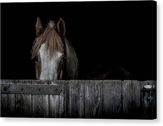 Equine Canvas Print - Peek A Boo by Paul Neville