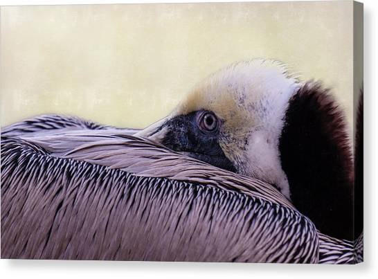 Pelican Connection 2 Canvas Print