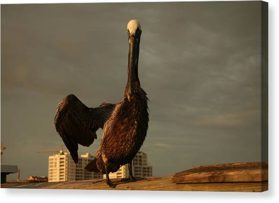 Ostriches Canvas Print - Pelican by Jackie Russo