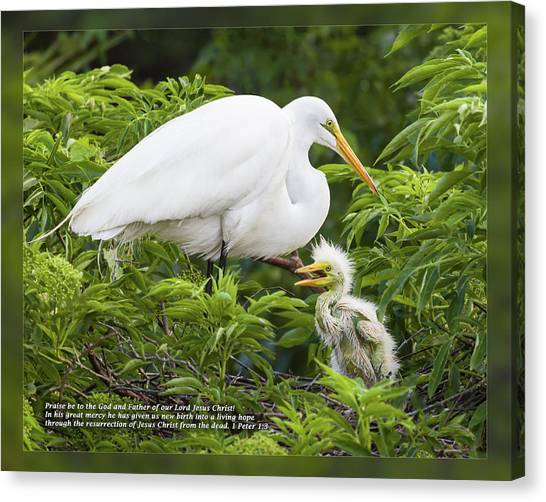 Canvas Print featuring the photograph 1 Peter 1 3 by Dawn Currie