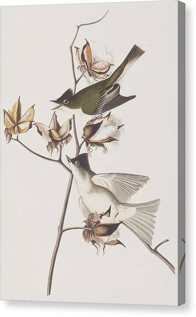 Flycatchers Canvas Print - Pewit Flycatcher by John James Audubon