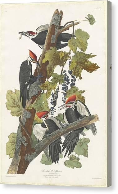 Wild Berries Canvas Print - Pileated Woodpecker by John James Audubon