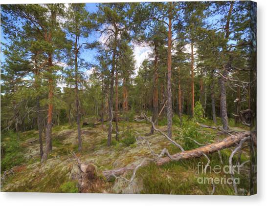 Mossy Forest Canvas Print - Pinewood by Veikko Suikkanen