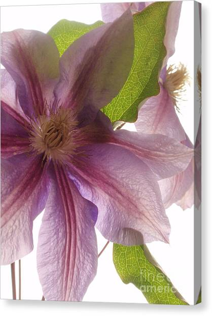 Pink Tenderness Canvas Print by Valia Bradshaw