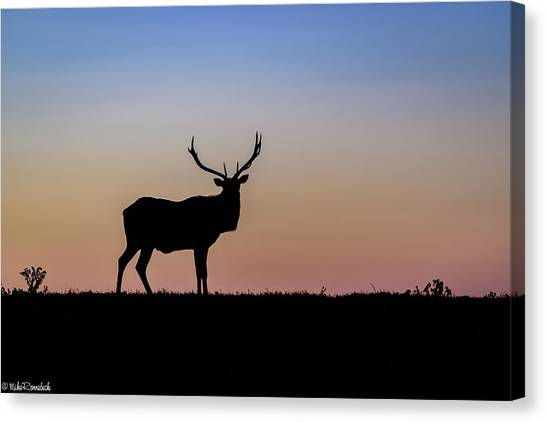Point Reyes Elk Canvas Print