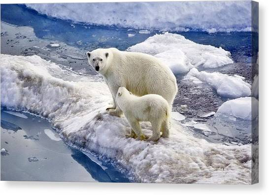 Polar Bear Canvas Print - Polar Bear by Alice Kent