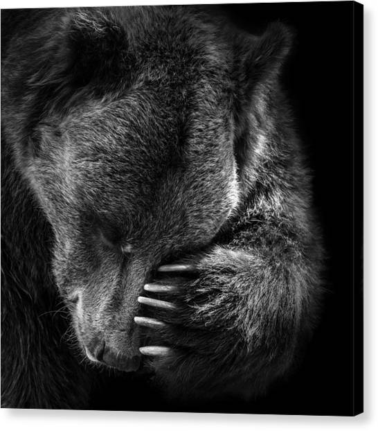Zoo Canvas Print - Portrait Of Bear In Black And White by Lukas Holas
