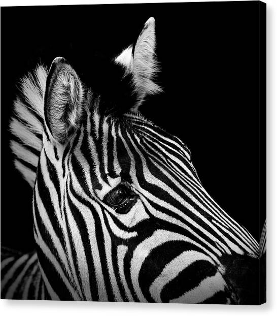 Zoo Canvas Print - Portrait Of Zebra In Black And White II by Lukas Holas