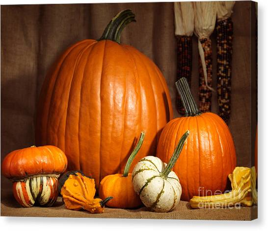 Indian Corn Canvas Print - Pumpkins And Gourds Still Life by Maxim Images Prints