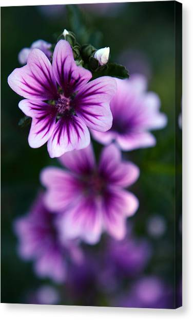 Purple Beauties Canvas Print