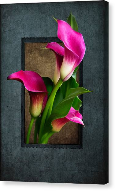 Purple Calla Lily Canvas Print
