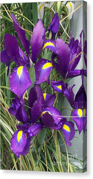 Purple Iris Canvas Print by Gail Salitui