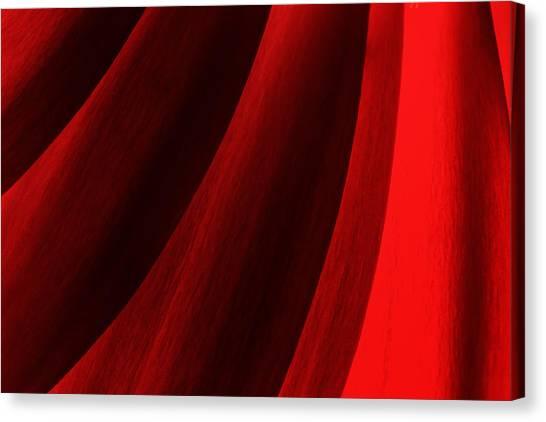 Red Chrysanthemum Dawn Rising Canvas Print