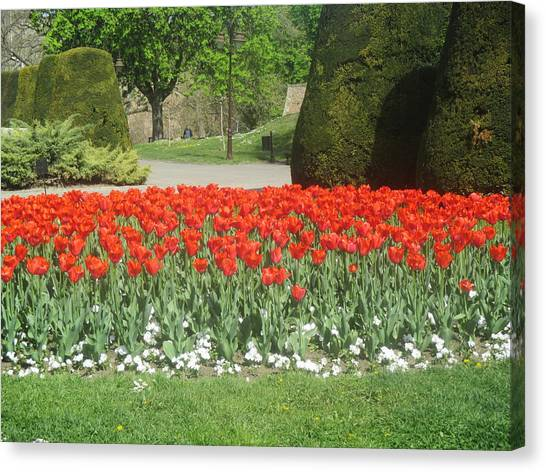 Tulips Canvas Print - Red Flowers In The Kalemegdan Park In Belgrade by Anamarija Marinovic