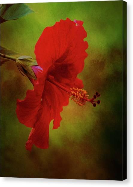 Red Hibiscus Art Canvas Print