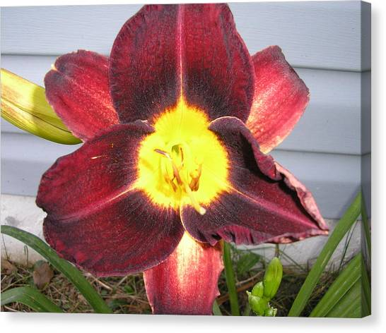 Red Lily Canvas Print by Tina Antoniades