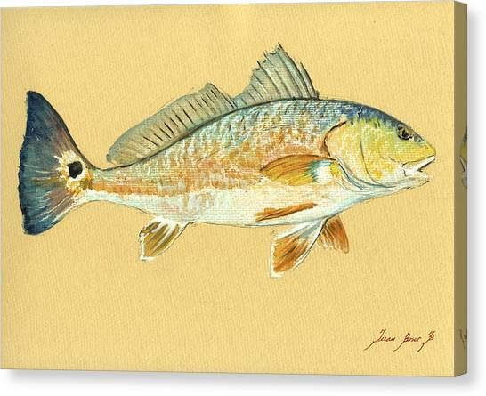 Miami Canvas Print - Redfish Painting by Juan  Bosco