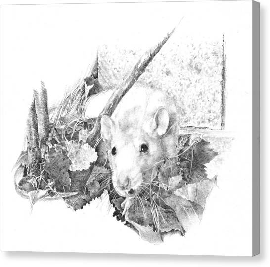 Reggie The Rat Canvas Print by Judith Angell Meyer