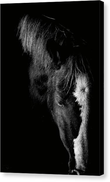 Equine Canvas Print - Remembrance  by Paul Neville