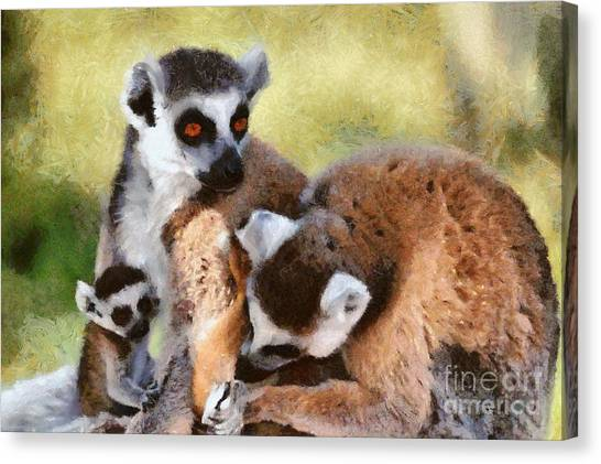 Ring-tailed Lemur Canvas Print - Ring Tailed Lemurs Family by George Atsametakis