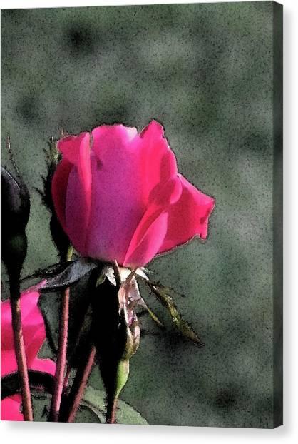Rosebud Canvas Print by Michele Caporaso