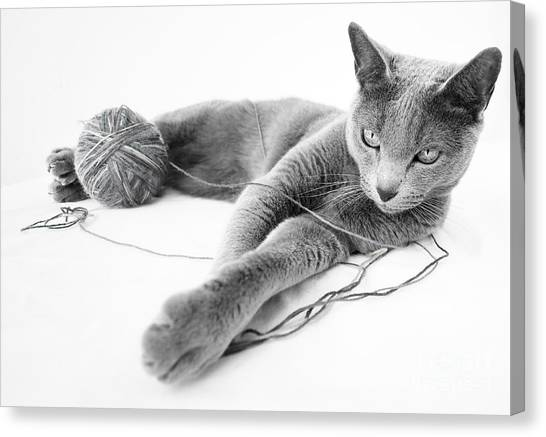 Carnivore Canvas Print - Russian Blue by Nailia Schwarz