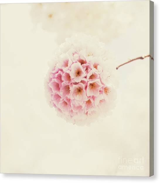 Sakura Canvas Print by Starfish Media