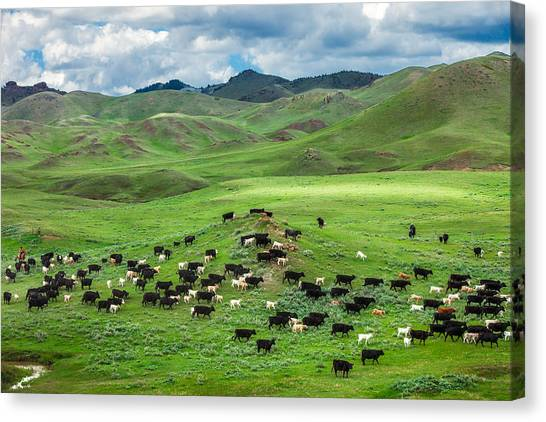 Grass Canvas Print - Salt And Pepper Pasture by Todd Klassy
