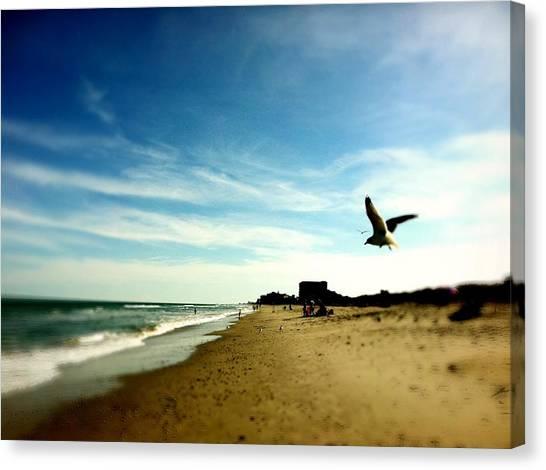 Seagulls At The Beach. Canvas Print