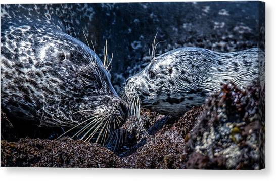 Seal Pup With Mom Canvas Print