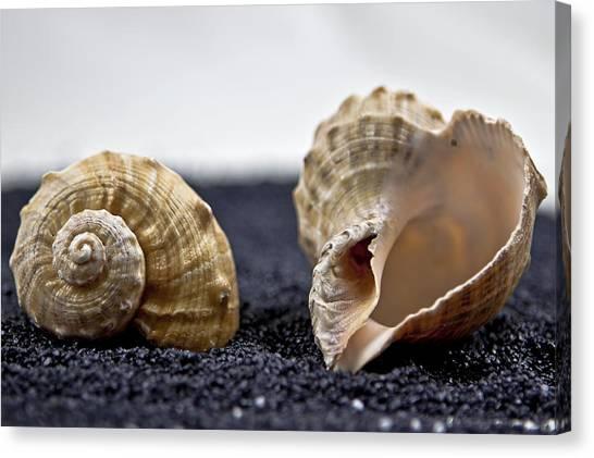Black Sand Canvas Print - Seashells On Black Sand by Joana Kruse