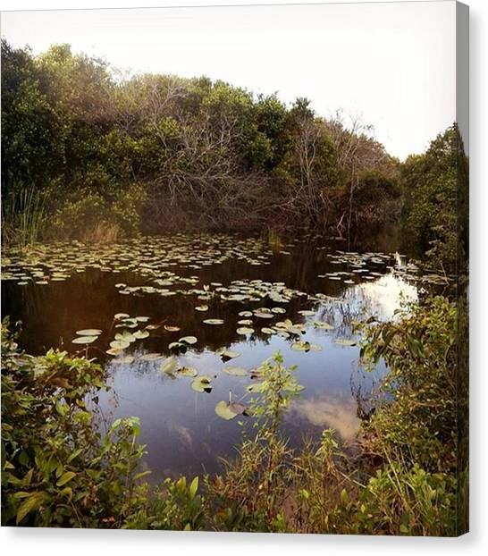 Everglades Canvas Print - #sharkvalley #everglades by Aurore Pizzo
