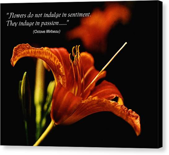 Single Tiger Lily Poster Canvas Print by Roger Soule