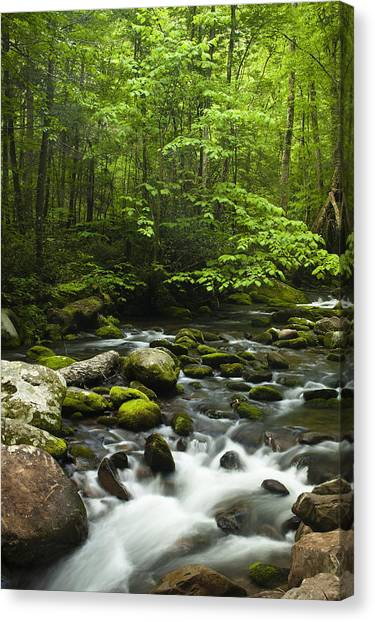 Rivers Canvas Print - Smoky Mountain Stream by Andrew Soundarajan