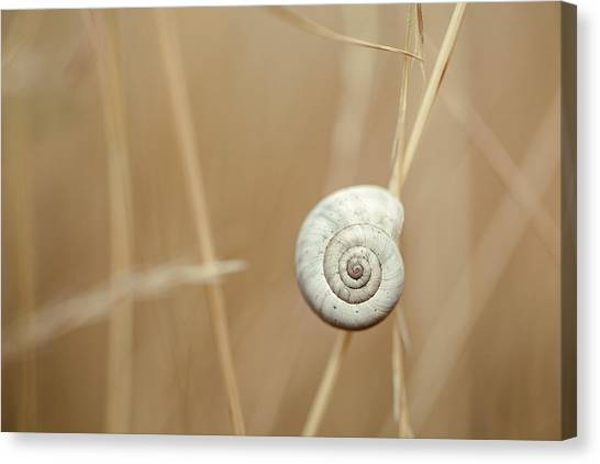 Autumnal Canvas Print - Snail On Autum Grass Blade by Nailia Schwarz