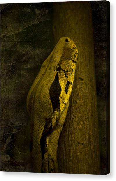 Snakes Canvas Print - Snake by Svetlana Sewell